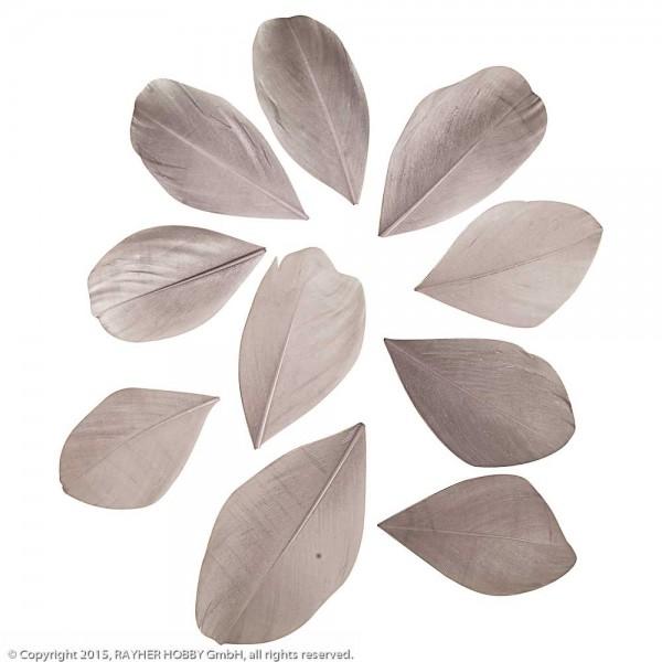 Rayher Federn geschnitten grau